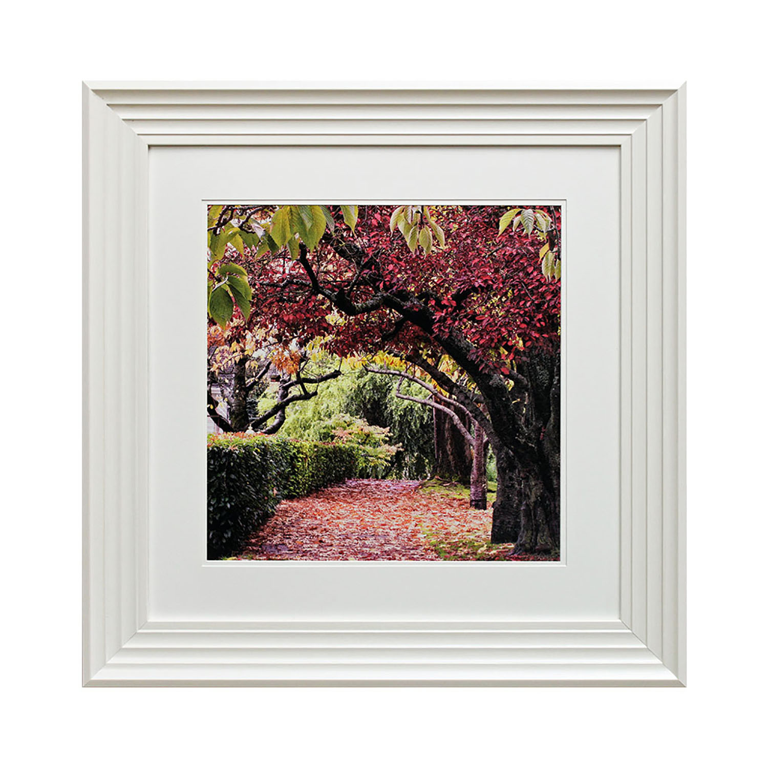 Complete Colour Framed Photography, Blossom Tree I, Pink