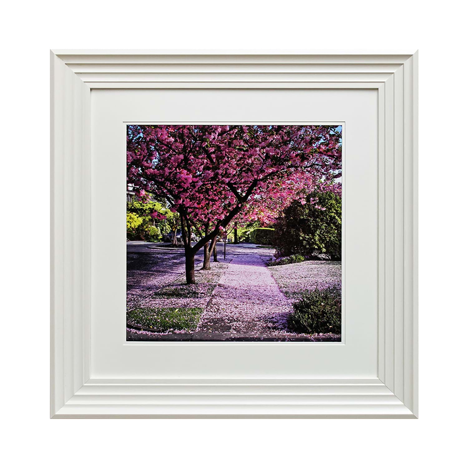 Complete Colour Framed Photography, Blossom Tree II, Pink