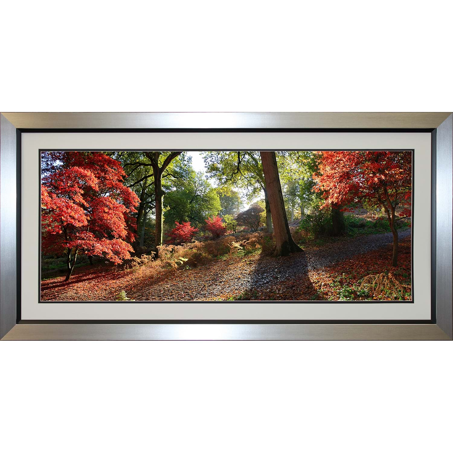 Image of Complete Colour Autumn Trees Framed Picture