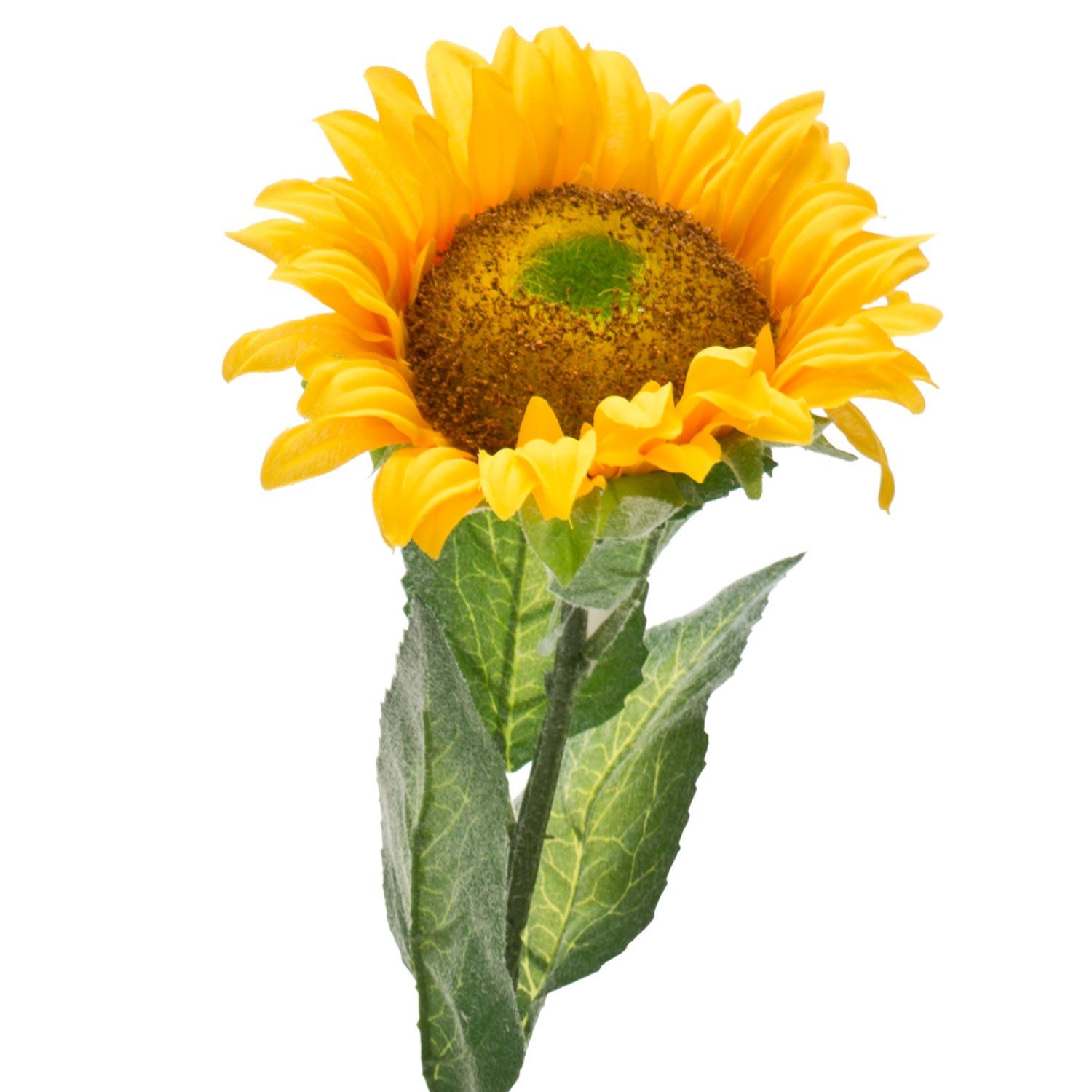 sunflower divorced singles Divorce, annulments  each hull yields a single small kernel which is  such as sunflower seeds, the national sunflower association says that eating too much of.
