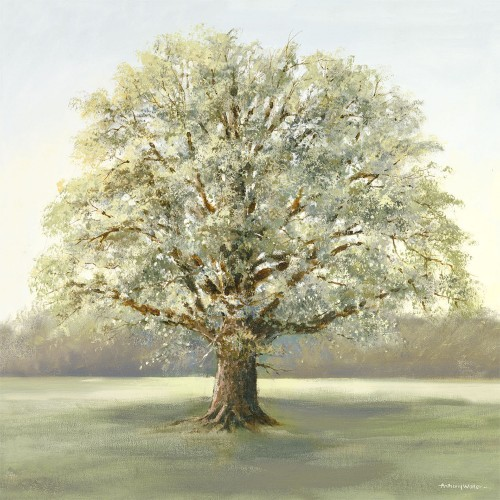 Mighty Grand Oak Canvas