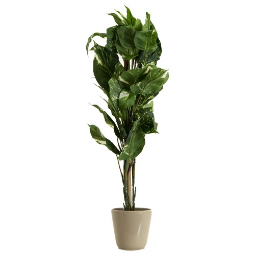 Casa Pothos Tree With Grey Pot 70cm, Green