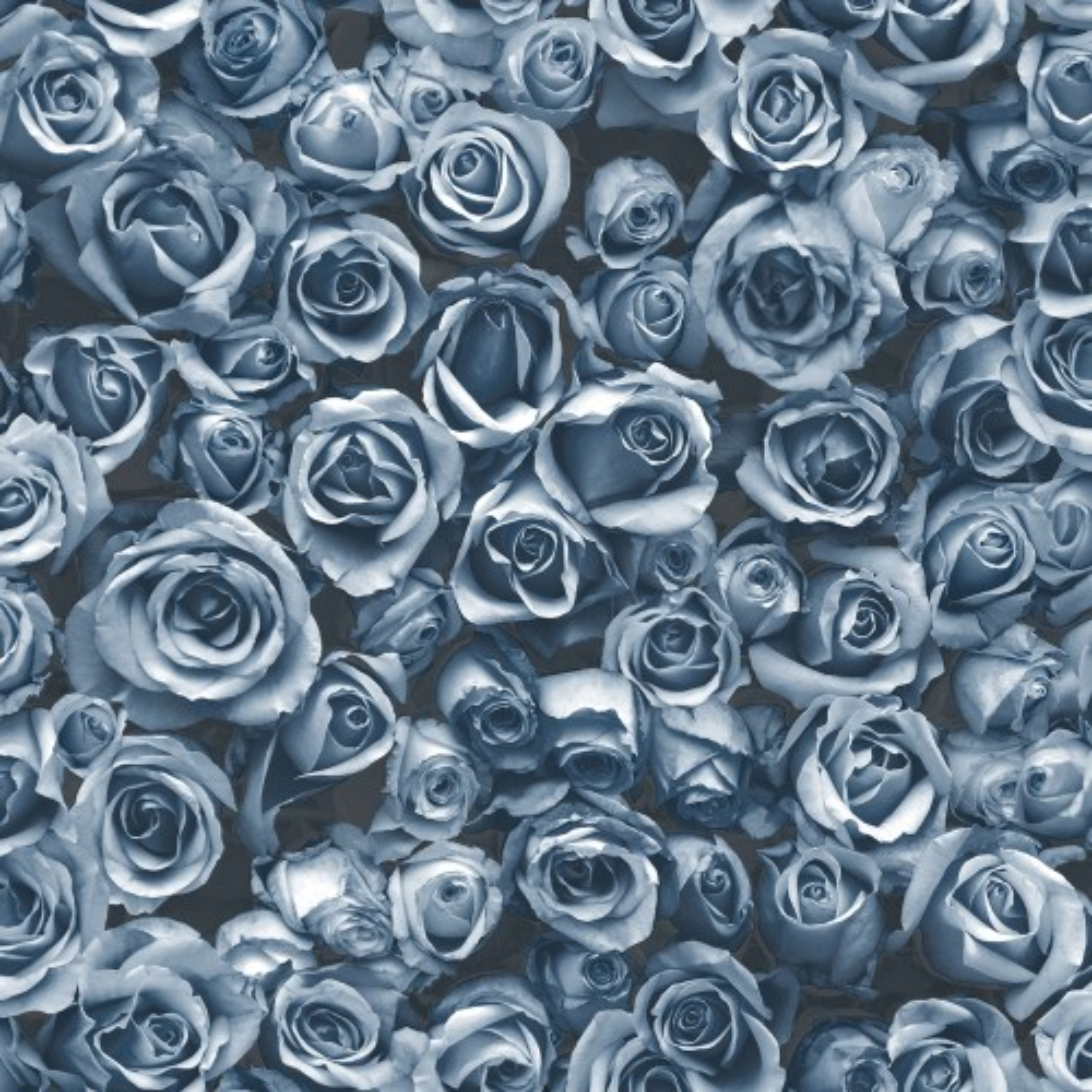 Muriva Rosalee Wallpaper, Blue