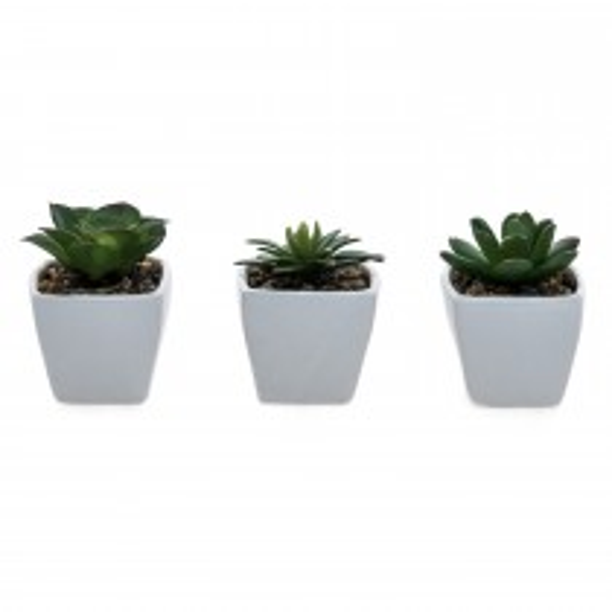 Casa Set Of 3 Mini Cacti, Green
