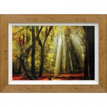 Complete Colour Yellow Leaves Rays Print