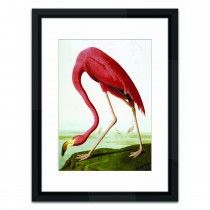 Brookpace Lascelles Flamingo, Multi