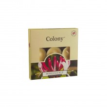 Colony Tealights box of 9 Honeysuckle