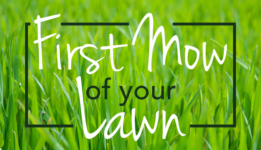 First Mow of your Lawn
